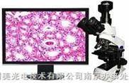 MSHOT数码倒置显微镜- 张茂生