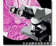 海淀区北京CX31奥林巴斯显微镜OLYMPUS高一年级的生物显微镜