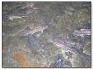 水產養殖飼料發酵劑